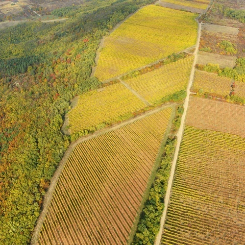 Kőkőtő Vineyard